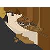 Cетка от птиц