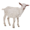 Кормовые добавки для мелкого рогатого скота