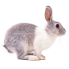 Кормовые добавки для кролей и нутрий