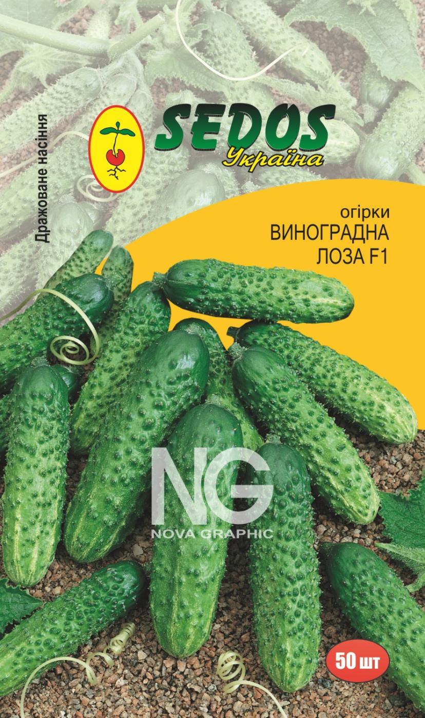 Огурцы Виноградная Лоза F1 (50 дражированных семян)
