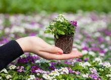 Рассада цветов: основные правила выращивания