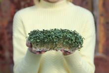 Микрозелень, как спасение от негативного влияния урбанизации