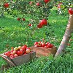 Календарь садово-огородных работ в августе