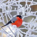 Календарь садово-огородных работ в декабре