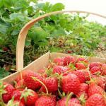Календарь садово-огородных работ в июне