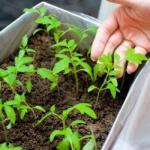 Календарь садово-огородных работ в марте