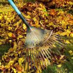 Календарь садово-огородных работ в ноябре