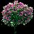 Саженцы лиственных деревьев и кустов