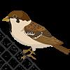 Сетки защита от птиц