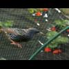 Сетка защита от птиц BIRD NET зелёная