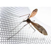 Сетка москитная серая, размер: ячейки 1,6х1,8мм, рулона 1,2х50м - Корея