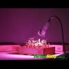 Фитолампа (светодиодная) 25 W, GR-25+удлинитель патрона Е27 с прищепкой