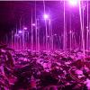 Фитолампа (светодиодная) 28 W, GR-28 - досветка растений в теплице