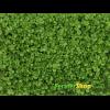 Микрозелень базилика