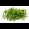 микрозелень Кресс салат