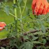 Провод садовый с режущим механизмом