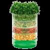 Семена микрозелени