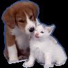 Корма для кошек и собак